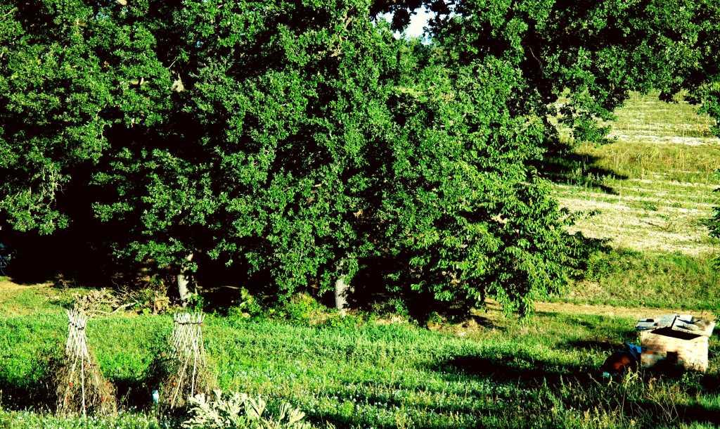 Vendemmia, strada e Terroir. La varietà agricola intorno ai filari.